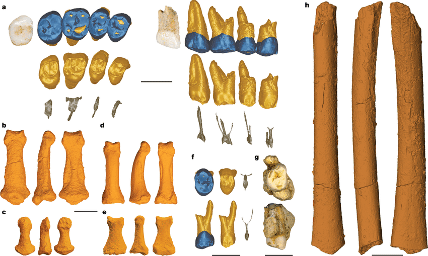 Fossil-remains